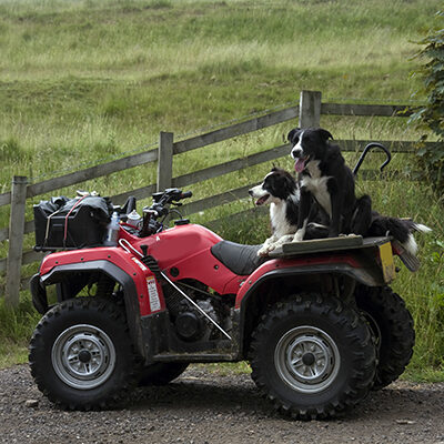 Quad Bike & Dogs website